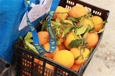 mmm...oranges.